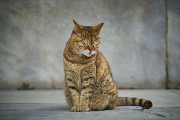 อาหารแมว เกรดพรีเมียม เพื่อสุขภาพแมว